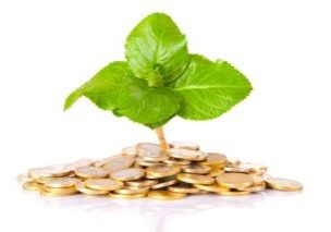 12555048 - coins and plant, isolated over white background